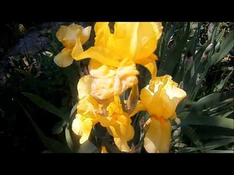 фото гарні квіти