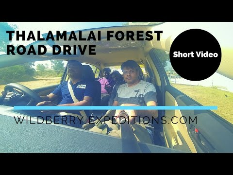 Thalamalai Forest Road Drive | Wildberry Expeditions | GoPro | Short Video
