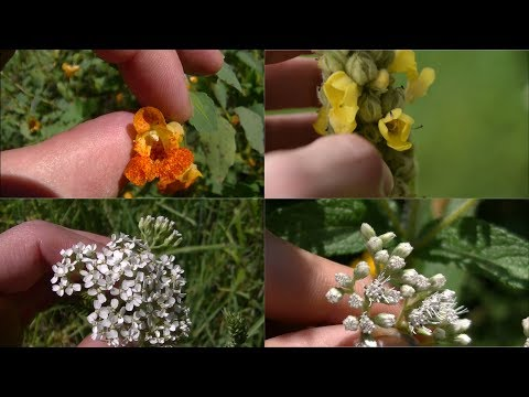 How To Identify 5 Medicinal Plants And Their Uses