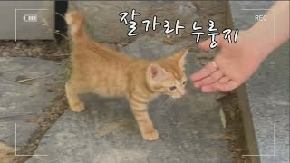 누룽지를 구조해주신 분들께 작별 인사해요.이제 집으로. . .Say goodbye to the people who rescued Nurungji. Now home. . .