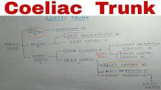 Coeliac Trunk - 3a/9