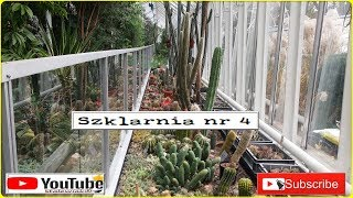 353-UW- Cz.7- Kaktusy, sukulenty. Szklarnie Ogrodu. Ogród Botaniczny Uniwersytetu Warszawskiego