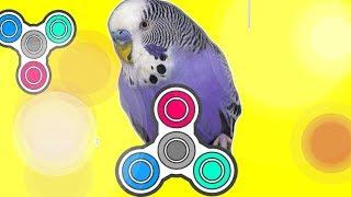 Веселый Волнистый Попугай Арчик играет с Фиджет Спиннером Видео для детей