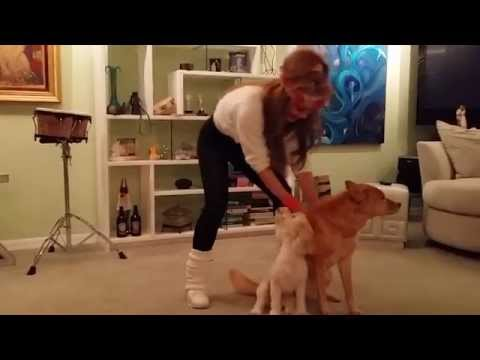 Confessions of a TV Life Coach Suzan Stadner & Pets, Shape Up L.A.!