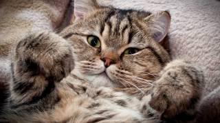 Почему кошки так много спят?