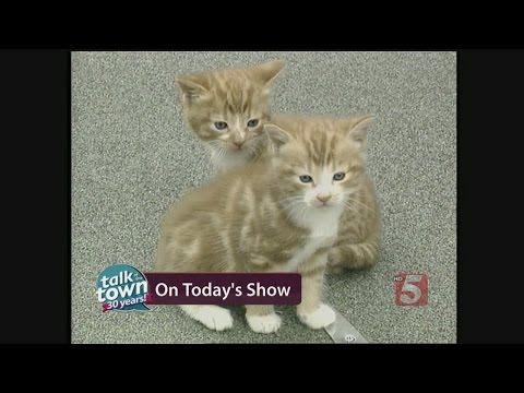 Feline Behaviorist Gives Top Tips For Cat Owners