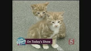 Feline Behaviorist Gives Top Tips For Cat Owners