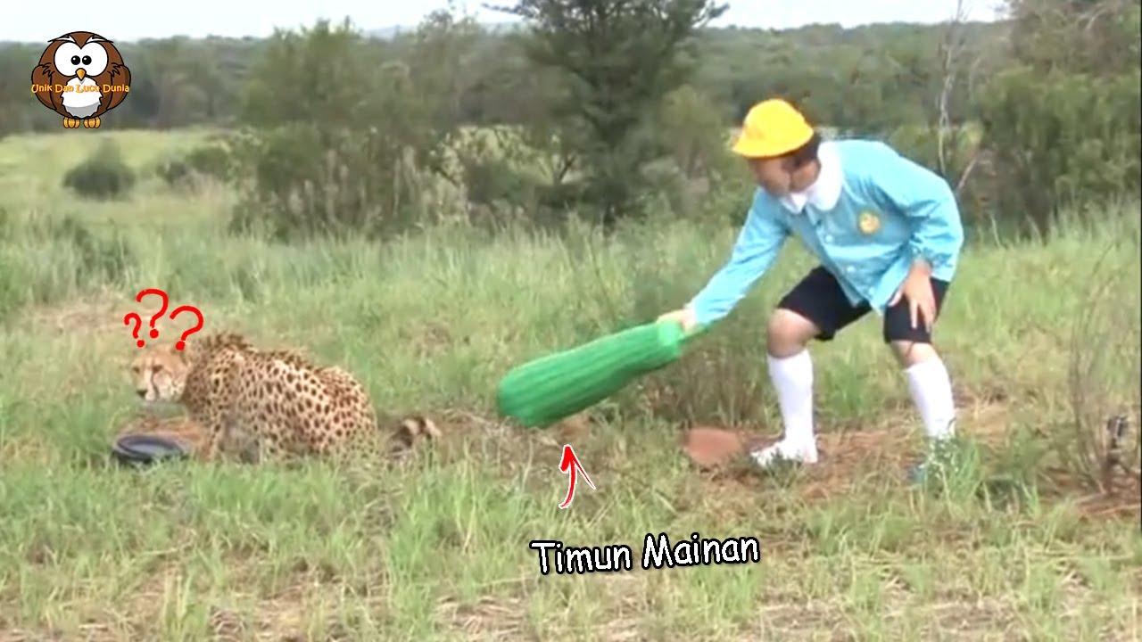 "Orang ini iseng Taruh ""Mentimun Mainan"" di Belakang Cheetah!! Reaksinya…"