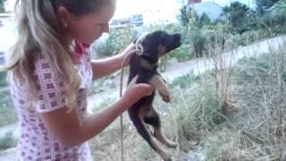 Пролетарская-щенок-ушиб или перелом лапки передней.