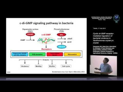 C. He - Cyclic di-GMP receptor-mediated regulation of bacterial..