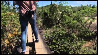 Hanging Foot Bridge Construction In Masinloc, Zambales