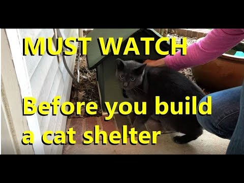 Building A Feral Cat Shelter Watch This First