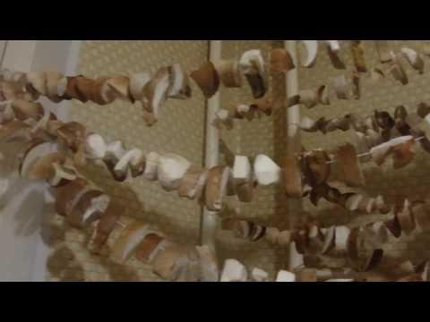 Как сушить  грибы в квартире, #Галкинtv