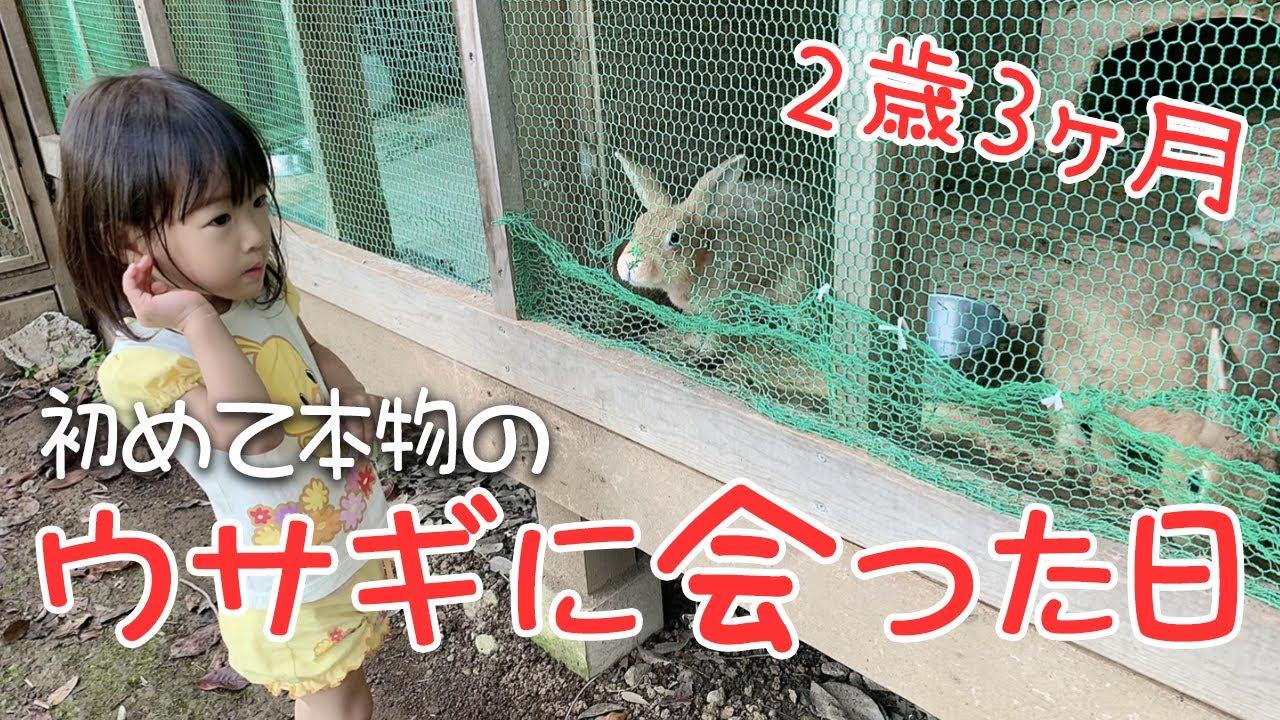 絵本とテレビでしか見たことがなかったウサギがついに目の前に!