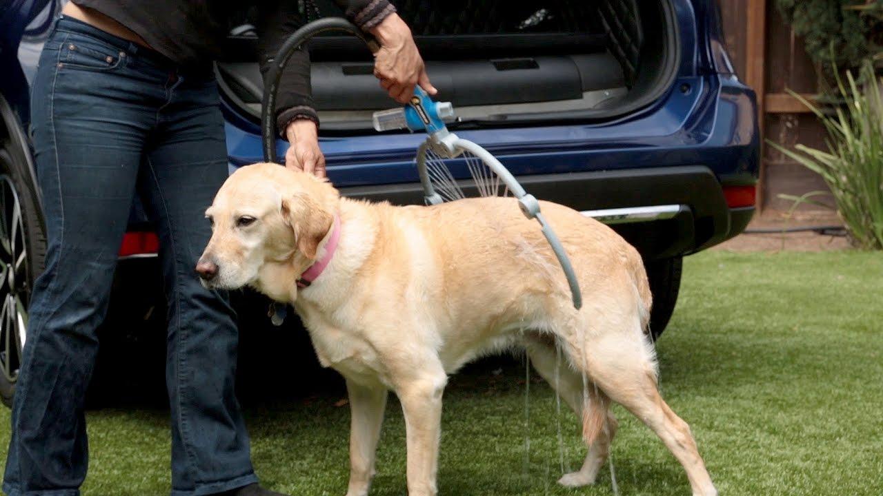 voc pin os dar ou fazer showers dog o na bagun sem banho cachorro shower melhores a em rea no lavanderia para de servi casa