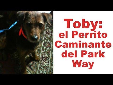 Toby: El perrito caminante del Park Way | Tu Mascota TV