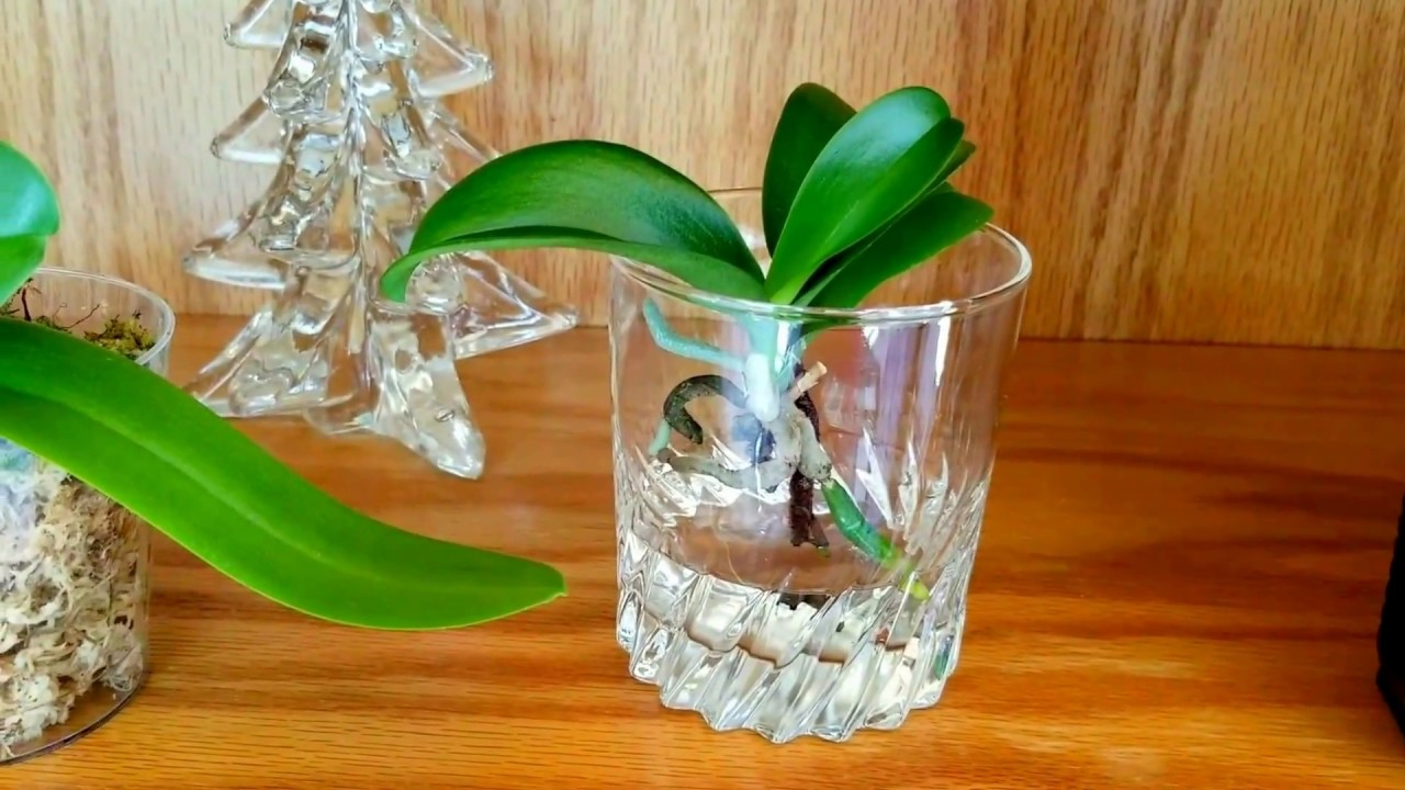 What type of fertilizer i use for my orchidse amountse what type of fertilizer i use for my orchidse amountse phr summer reviewsmspy