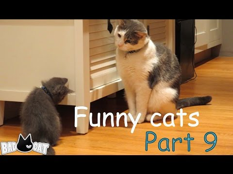 Adorable Cats Compilation   Best Funny Cat Videos Ever Part 9