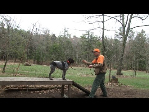 Training Steadiness with Jason Carter Part 1
