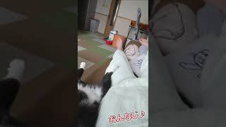 飼い主と同じ格好で寝る猫www【#Shorts】