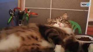 Золотая кошка Витебска 2014(, 2014-09-14T22:02:37.000Z)