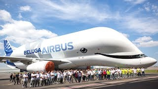 Everything You Would Want To Know About the Airbus Beluga!