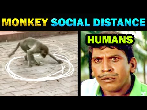 MONKEY SOCIAL DISTANCING TROLL - TODAY TRENDING