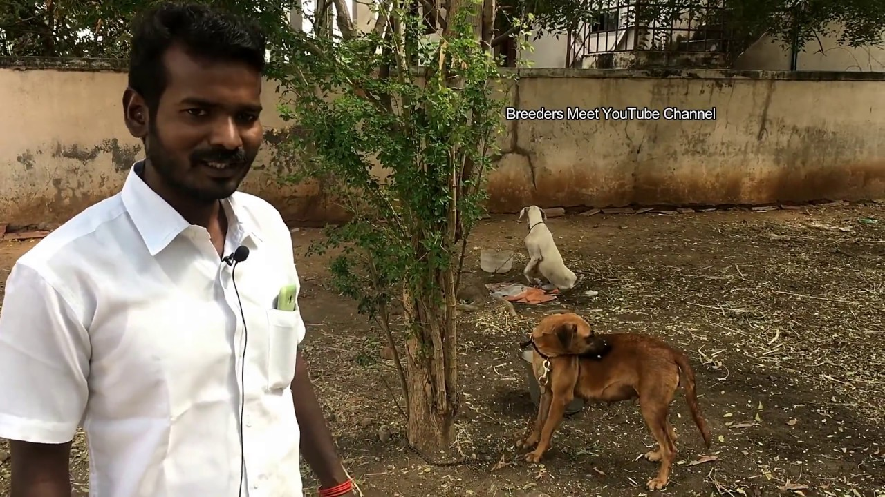 Kombai Videos - Latest Videos from and about Kombai, Tamil Nadu, India