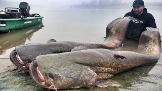 GOLIATH CATFISH 250 POUND 8,20 FEET RECORD FISH - HD by YURI G…