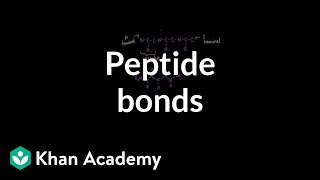 Peptide bonds: Formation and cleavage | Chemical processes | MCAT | Khan Academy