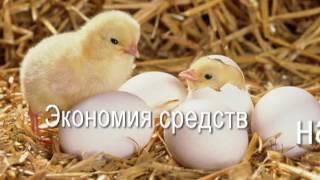 Ферментационная подстилка для животных