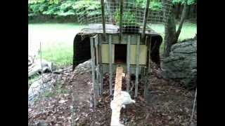 Free Homemade Chicken Coop Using All Recycled Materials