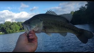 The Easiest Way To Catch Bass