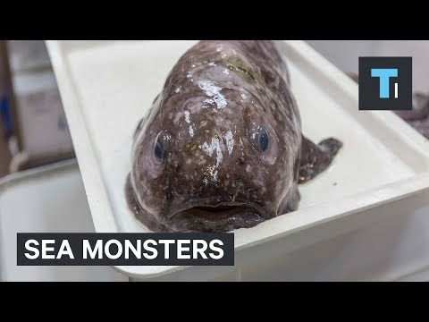 Monstrous Creatures Living In The Ocean's Abyss