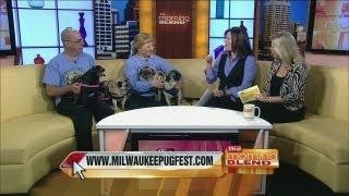 Milwaukee Pug Fest