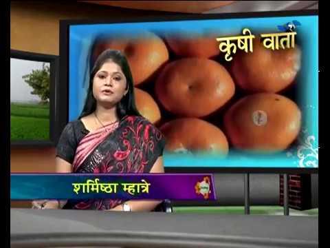 Krishivarta Bajarbhav - 10 July 2018 - कृषीवार्ता बाजारभाव