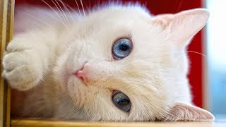 So Very Cute Cats Videos Compilation - Too Funny Too Cute 🐱