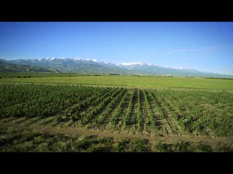 ASSA VALLEY ALMATY ARBA WINE