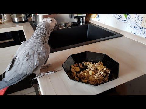 Наблатыканный попугай матершинник говорит с хозяином и ругается говорящий попугай Рико Жако