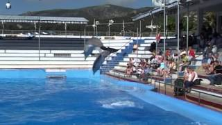 Mallorca TREFFEN Teil 5  SeniorenReisen (c)2003 W.Knorr
