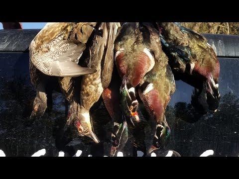 The Invincible Wood Duck   Georgia Duck Hunt 2019