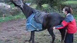 Download Gay, A Very Itchy Horse Mp3 and Videos