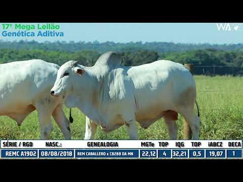 LOTE 22 - DUPLO - REM 10204   REMC A 1902 - 17º Mega Leilão Genética Aditiva 2020