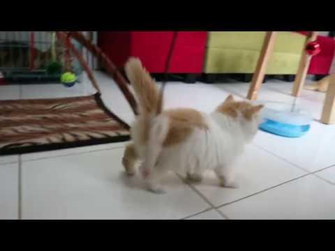 Persiapan Merawat Kucing untuk Pemula.