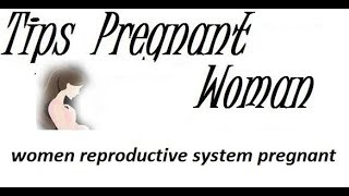 women reproductive system pregnant