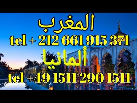 north africa shipping of Kulbacki pigeons contact in Morocco  المغرب tel +212 661-915371