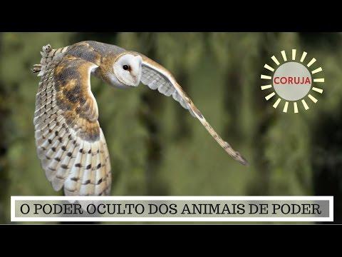 Significado Coruja - O Poder Oculto do Animal de Poder!