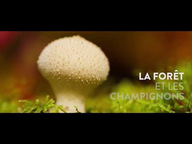 Les champignons et la forêt en Isère - Connaître, c'est déjà agir