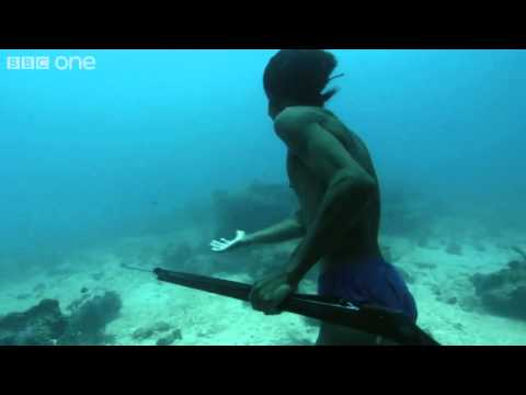 Superhuman Filipino diver from the Badjao tribe ;BBC