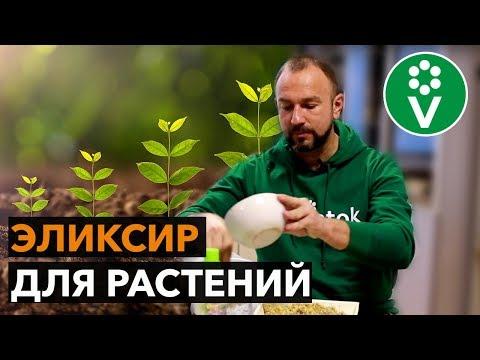 Стимулятор роста растений своими руками